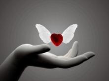 petit-coeur-d-ange_3642162-XL